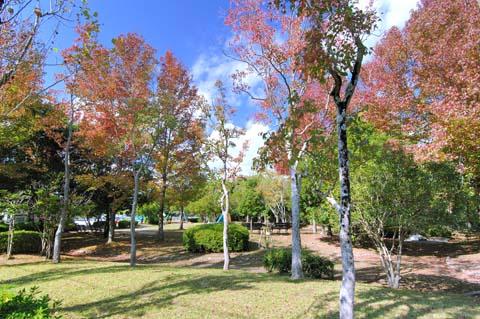 深山池公園の紅葉061027-01