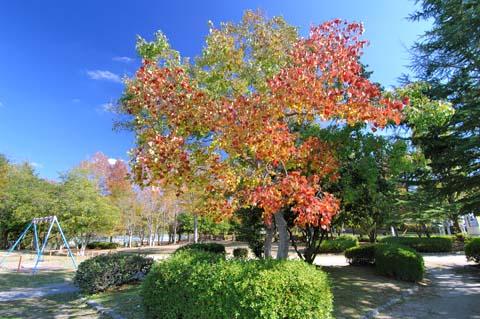 深山池公園の紅葉(2006.11.08撮影)