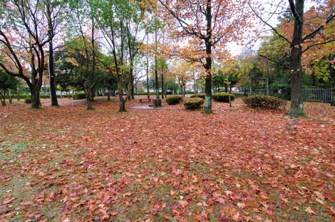 深山池公園の紅葉(2006.11.20)
